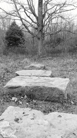 DHCT, Caywood Reserve Stone Bench Stone Tree Porn Caywood Reserve Dhct Outdoors Winter Hiking Nature Trail Black And White Pennsylvania