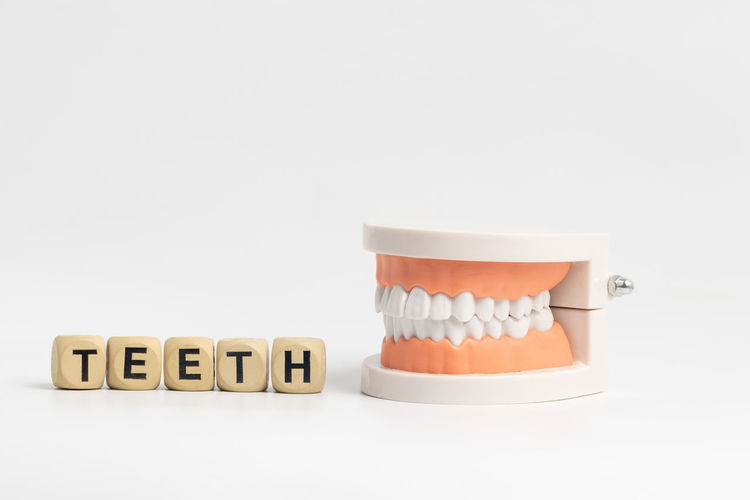 Model teeth for
