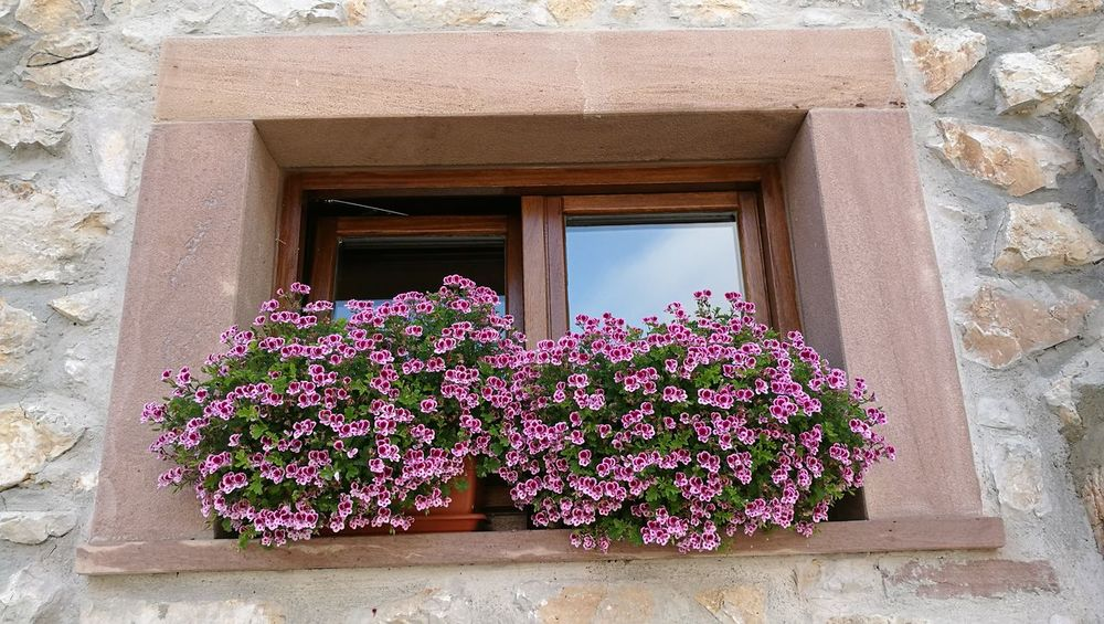 Flower Window Freshness Growth Architecture Built Structure Fragility Building Exterior Low Angle View Window Sill Beauty In Nature Nature Day Outdoors In Front Of Flower Head Pink Color Growing Historic Stone Material Tresviso Cantabria Asturias