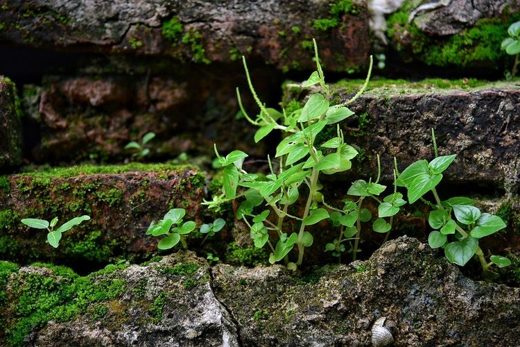 Nature Plant Outdoors No People Day Leaf Green Color Close-up Growth Beauty In Nature Freshness