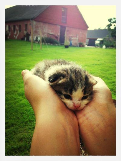 Catoftheday Cute Cat