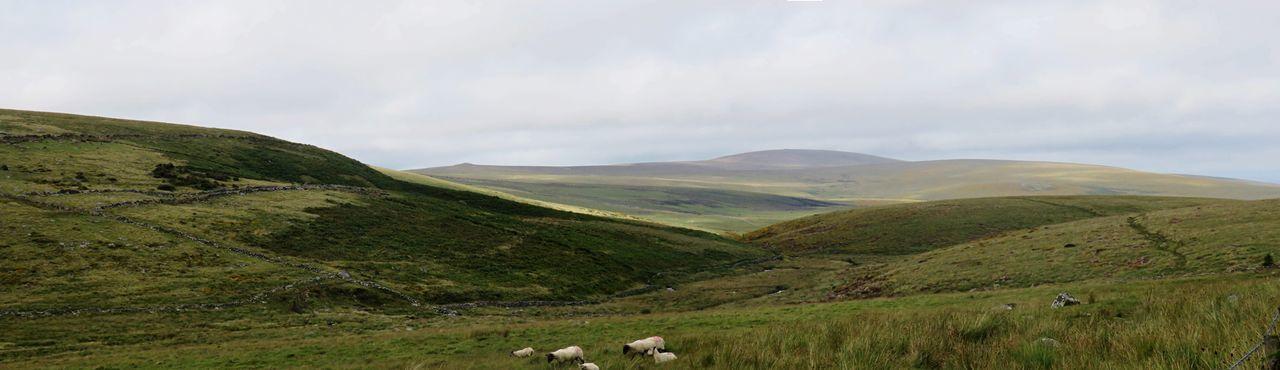 Dartmoor scenes
