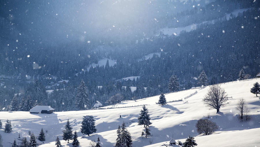 Snow covered land and trees against mountain