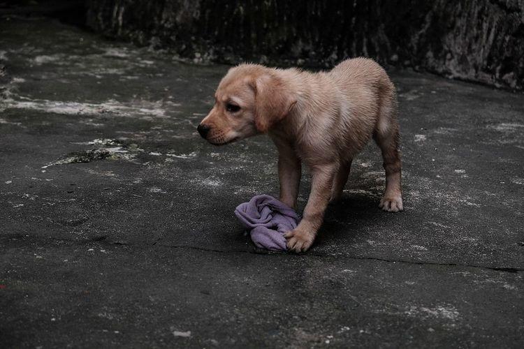 One Animal Mammal Animal Wildlife Animal Themes Dog No People Nature Outdoors Day