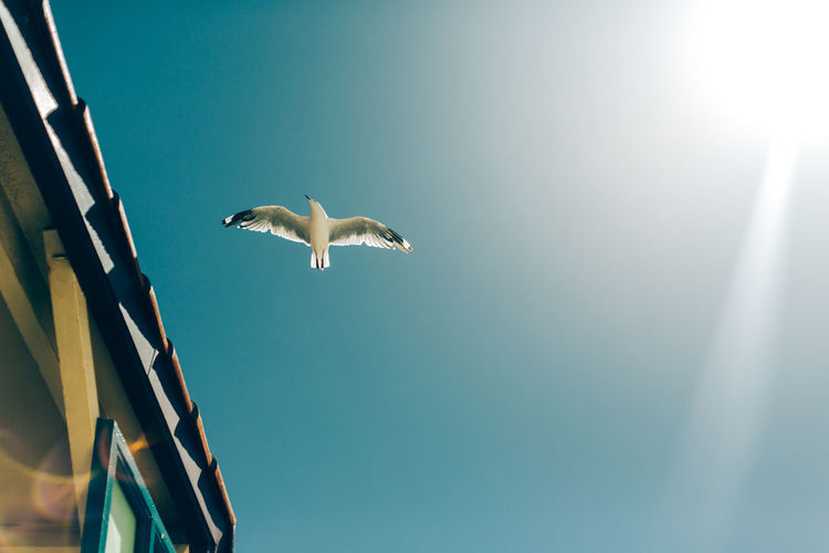 Sky Bird Vertebrate Flying Animals In The Wild Animal Wildlife Low Angle View Animal Themes Spread Wings Animal Nature Day No People Mid-air One Animal Sunlight Seagull Clear Sky Outdoors Outdoor