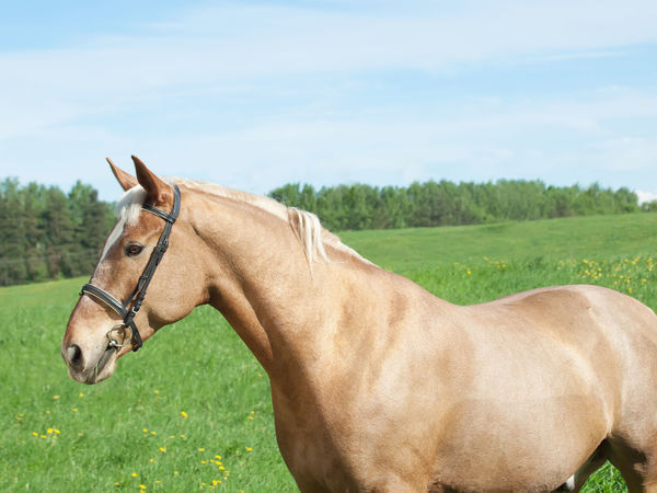 Animal Themes Brown Close-up Day Domestic Animals Field Grass Green Color Horse Landscape Livestock Mammal Nature No People One Animal Outdoors Sky