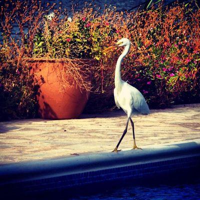 Bahrain Wildlife Birds Samsung Galaxy S4 Zoom
