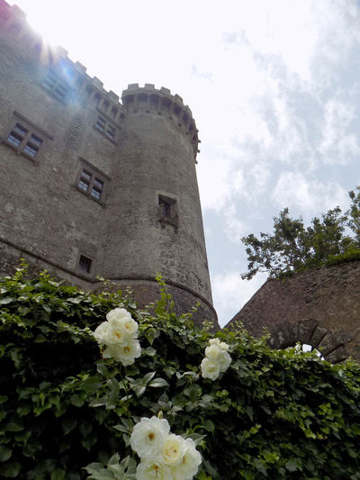 Castle Italianstyle MedievalTimes Sky And Clouds White Roses Architecture Bracciano Building Exterior Buildings & Sky Built Structure Castle Tower Day Fort Fortress Italian Architecture Low Angle View Medieval Architecture Medieval Castle No People Outdoors Plant Roses Sky Stronghold Tower