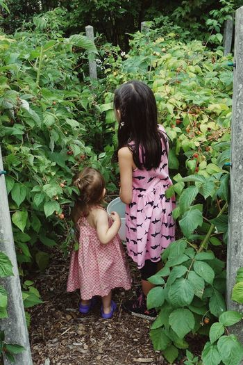 Rear View Of Siblings Picking Raspberries In Yard