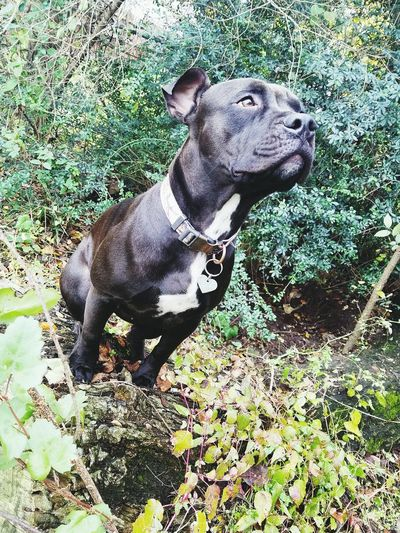 Pets One Animal Animal Themes Mammal Dog Domestic Animals Green Color Sitting No People Growth Day Nature Outdoors Beauty In Nature Beautiful Nature Pitbulllife Black Dog Portrait Bullybreed Pitbullloversunite Dogs Life Full Frame Tree Stump Cracked Nature