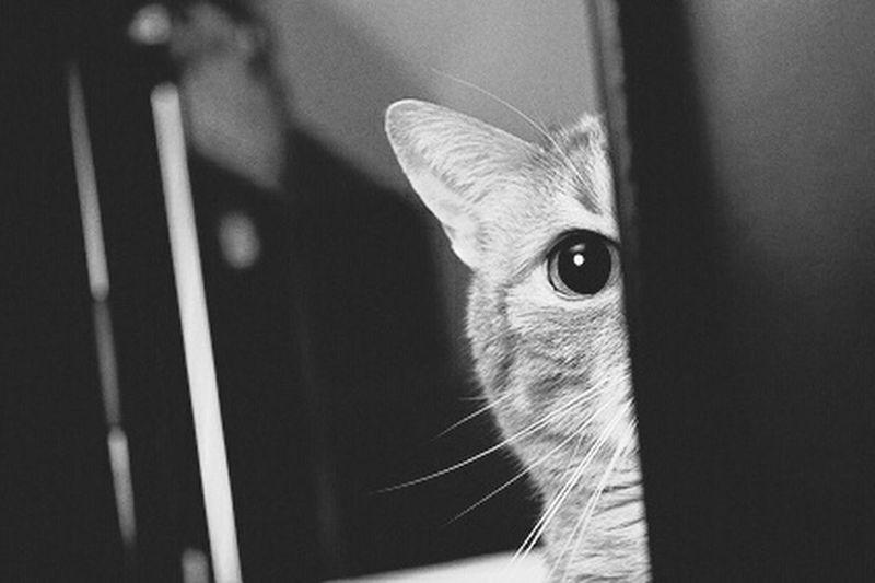 Kitty Ace Acethecat Catace Blackandwhite B&w Ilovemycat Catlovers Cat Lovers Catsofinstagram Cats Cat Ilovecats Cat♡ Animals Pet LittleDevil Openwide