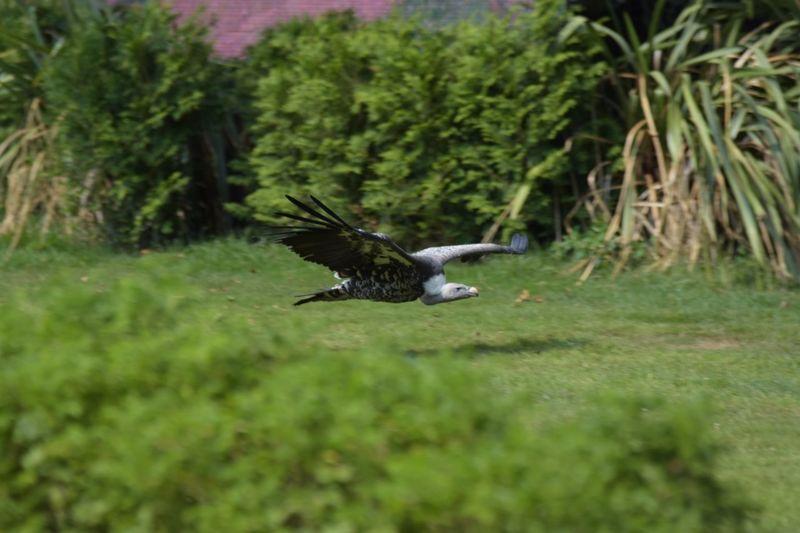 Cóndor  Animal Themes Bird Animals In The Wild Animal Wildlife Animal One Animal Vertebrate Flying EyeEmNewHere