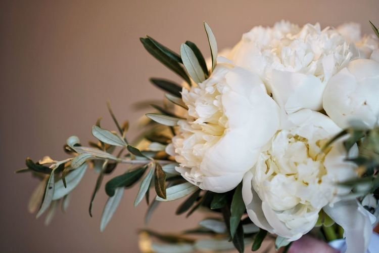 Close-up of white flowering peony bouquet