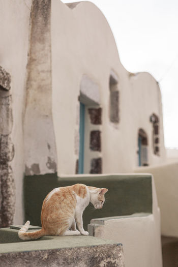 Cat looking through wall
