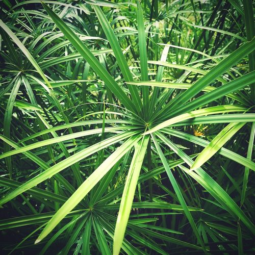 Green Green Leaf Green Color Nature Plant Growth Beauty In Nature Backgrounds No People Greener Fragility Geometry In Nature Geometric Shape