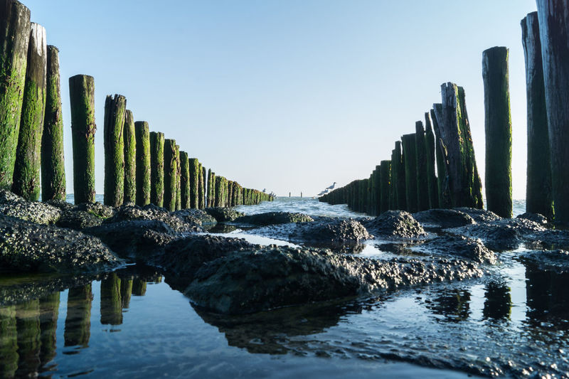 Westkapelle -Netherlands Beauty In Nature Clear Sky Day Holland In A Row Nature No People Outdoors Shore Shoreline Sky Water Wooden Post