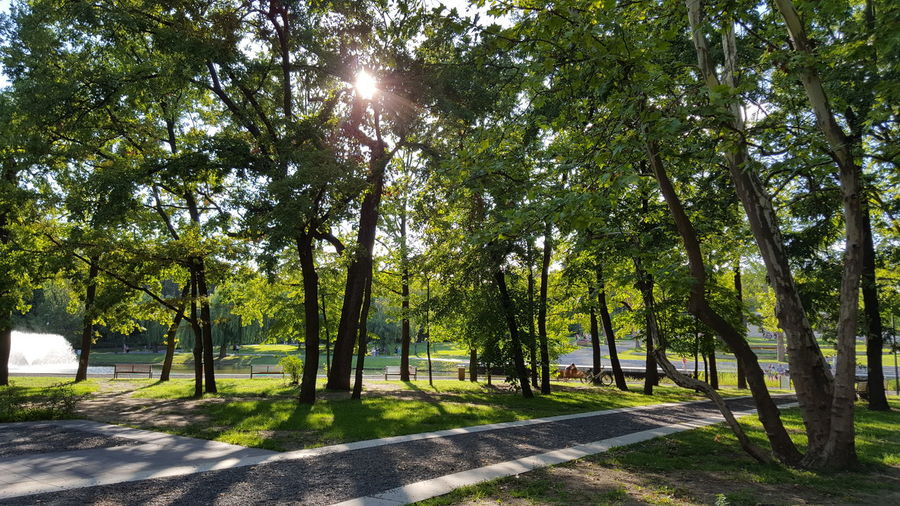 Nature Tree Outdoors Day Nature Growth Green Color Shadow No People Tranquility Sunlight Tree Trunk Beauty In Nature Landscape Sky Enjoyment Summer Fascination Cheerful Debreceni Nagyerdő Park Beauty In Nature Sun Amazing Narurelovers EyeEmNewHere