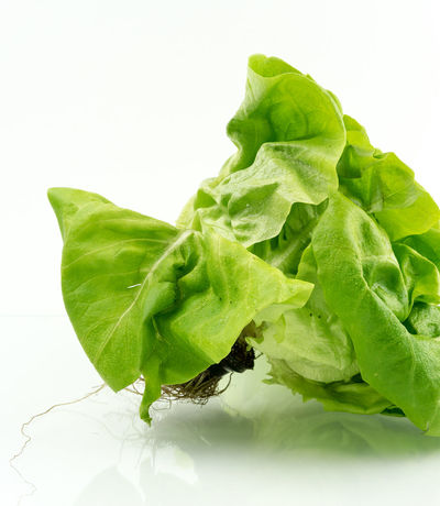 Aquaponic Close-up Freshness Green Green Green Color Healthy Healthy Eating Hydroculture Indoors  Lettuce No People Organic Plant Plant Pot Roots Salad Show Us Your Takeaway! Showcase April Still Life Studio Shot Vegetable White White Background
