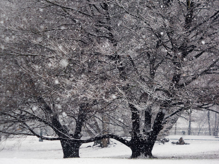 Snow Tree Winter Cold Temperature Plant No People Nature Land Tranquil Scene Environment Snowing Beauty In Nature Scenics - Nature Bare Tree Tranquility Day Branch Non-urban Scene Frozen Blizzard Extreme Weather Outdoors Treelined