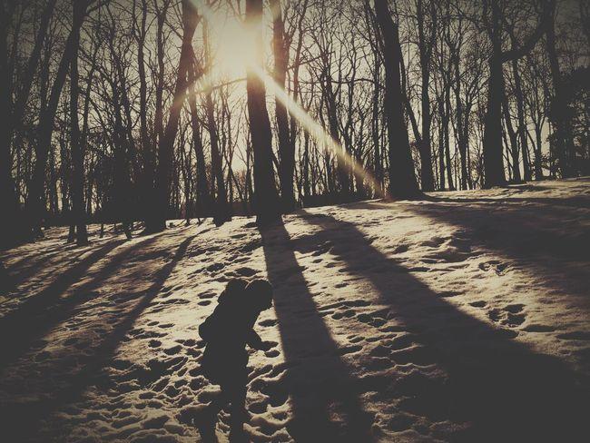 Light And Shadow Shadow Silhouette Winter Nature Sun Trees EyeEm Best Shots Urban Nature Walking Around