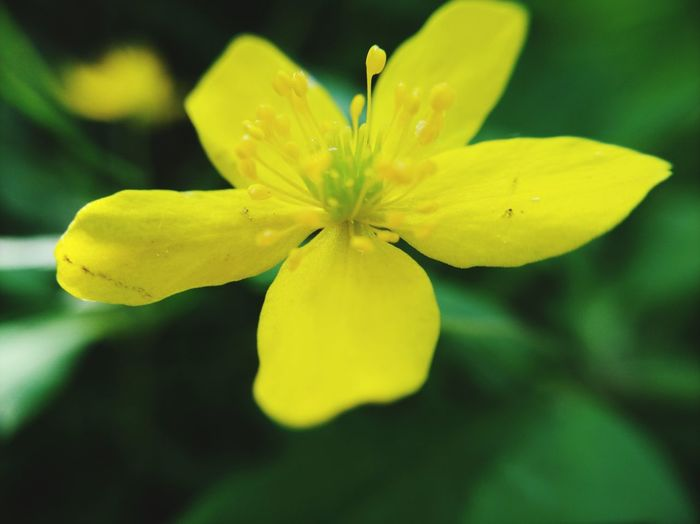 Mobilephotography Flower Head Flower Yellow Beauty Petal Blossom Close-up Plant