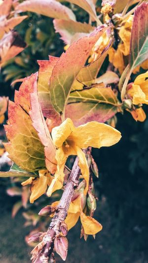Nature Leaf Plant Beauty In Nature Growth Flower Outdoors Fragility Day Freshness Flower Head First Eyeem Photo