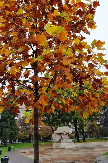 Tree Autumn Nature Change Tranquility Growth No People Scenics Leaf Day Branch Outdoors My Beautiful City Cityscape Cityscapes Urban Nature Urban Landscape Rainy Days Rain