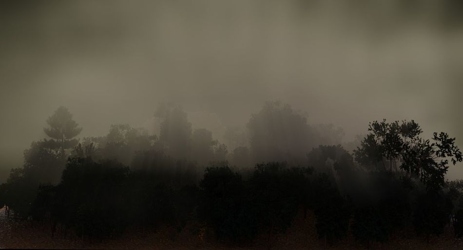 Panoramic view of trees against sky during foggy weather