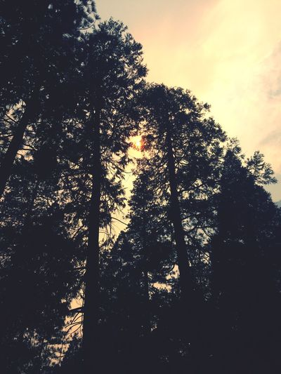Лес Tree Sky Plant Silhouette Sunset Low Angle View Nature Beauty In Nature Cloud - Sky Day Tree Trunk Tranquility First Eyeem Photo