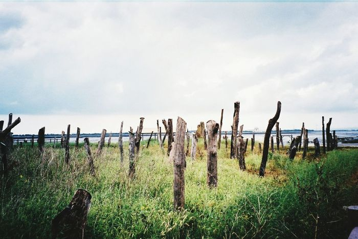 Cloud - Sky Grass Field Growth Nature Wooden Post Film ISO Fujifilm Taiwan Grass Field Cloud - Sky Sky Landscape Safety Growth Fence Protection Plant Tranquility Tranquil Scene Wooden Post Non-urban Scene Nature