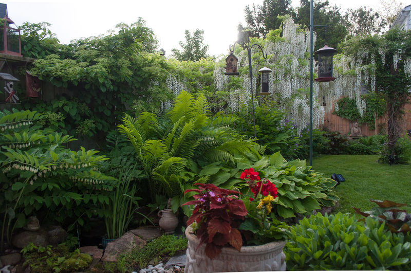 Flowering plants and trees in garden