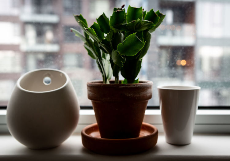 Pots on window sill Plant Indoors  Potted Plant No People Focus On Foreground Close-up Window Plant Part Houseplant Flower Pot Schlumbergera