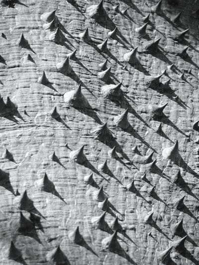 Teepee city. Robin Fifield - Flora Bark Texture Tree_collection  Tree Bark Spikey Texture Black And White Texture Andalucia Rural
