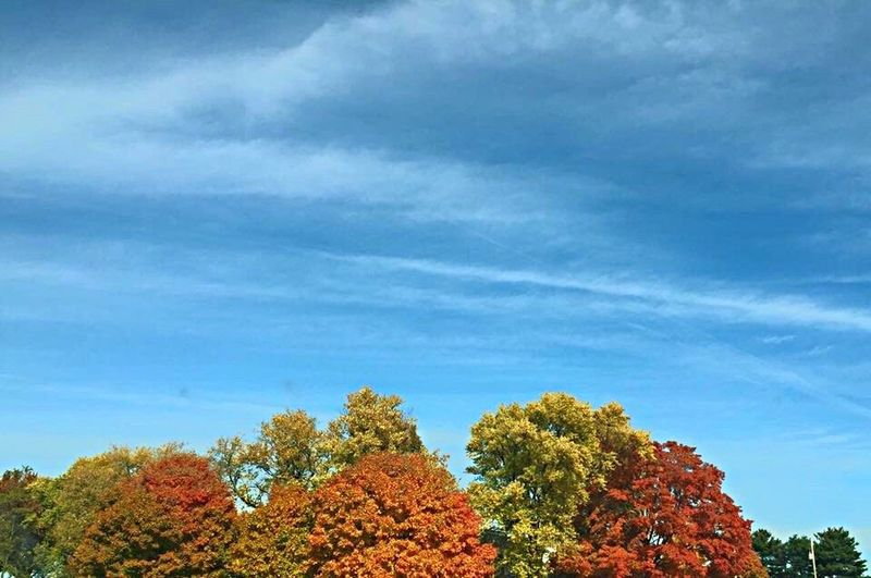 Tree Nature Beauty In Nature Cloud - Sky Scenics Outdoors EyeEmNewHere Eye4photography  Autumn Fall Colors EyeEmNewHere
