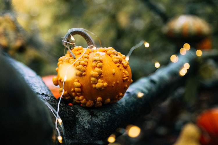 Close-Up Of Pumpkins On Illuminated Tree During Halloween