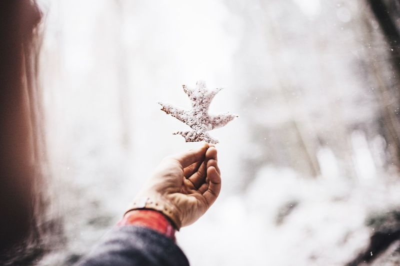 Cropped image of woman hand holding snow covered oak leaf