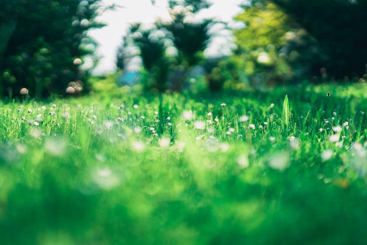 A Daisy Meadow
