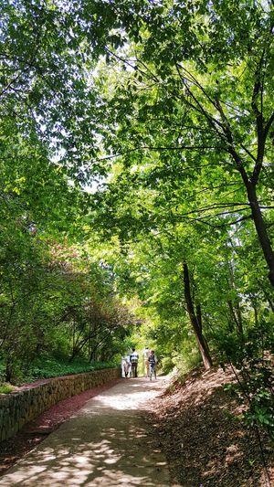 눈이 시릴 정도로 초록초록하다 Happy Walking Tree Grass Green Color