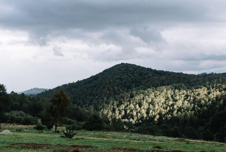 Canto del Bosque Beauty In Nature Cloud - Sky Day Environment Field Landscape Mountain Nature No People Non-urban Scene Scenics - Nature Sky Tranquil Scene Tree