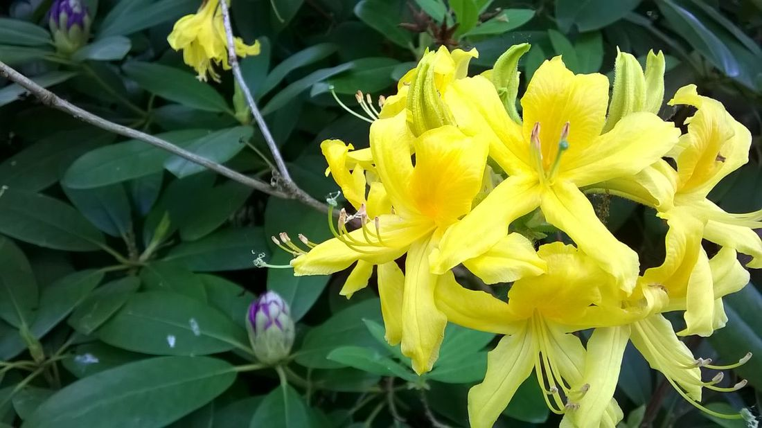 Yellow Flowers Nature