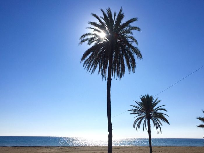 Low Angle View Of Palm Tree By Sea Against Clear Sky