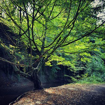 Tree Landscape Sunlight Green