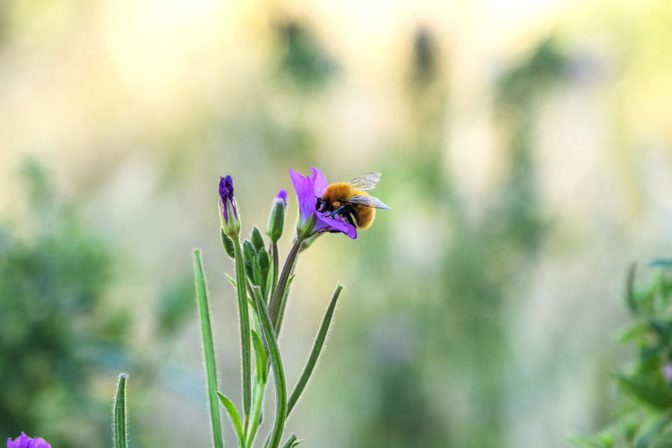 Close-up Flower Flowering Plant Plant Beauty In Nature Growth Fragility Vulnerability  Freshness Petal Focus On Foreground Nature No People Flower Head Inflorescence Purple Day Green Color Plant Stem Outdoors Pollination