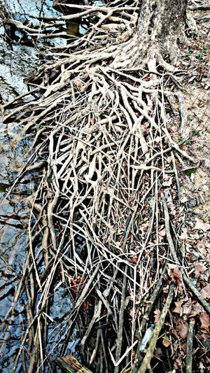 Full Frame Day Backgrounds No People Outdoors Nature Cold Temperature Close-up Root Roots Of Tree Roots Of Life EyeEmNewHere