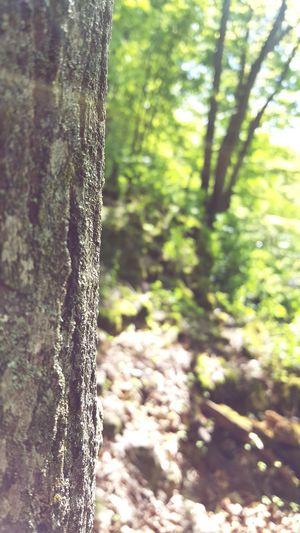 Just around the corner Nature Beauty Trees Reen Summer Light