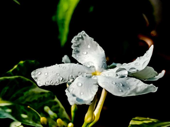 rainy white
