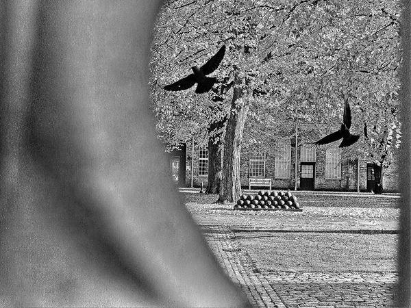 Back Yard Birds Black & White Black And White Blackandwhite Entrance Flying Birds Front Door Garden Gate Main Entrance Sculpture Statue