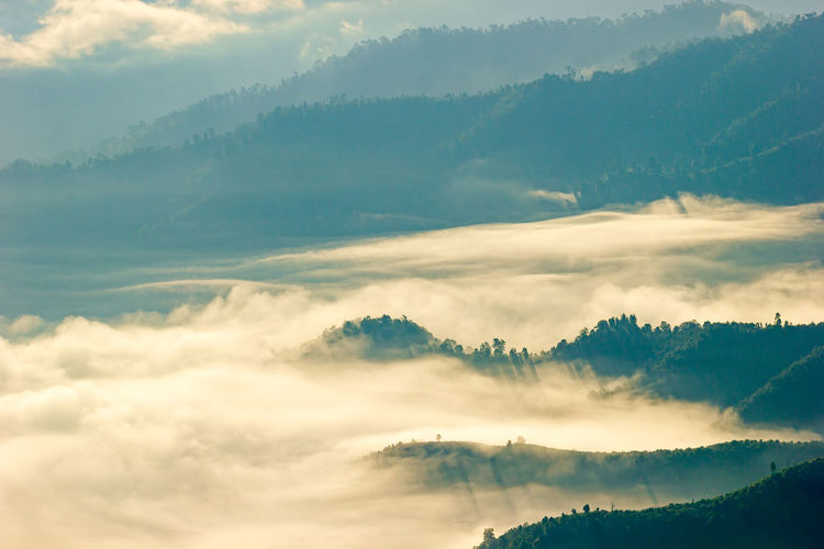 The fog floats on the top of a tree in the forest on mountain. Mountain Fog Landscape Morning Light Tree Forest View Environment Hill Top Nature Season  Tourism Outdoors Autumn Cool Sunrise Maehongson ,Thailand Dawn Range Scenics Peak Valley Dimension Tropical
