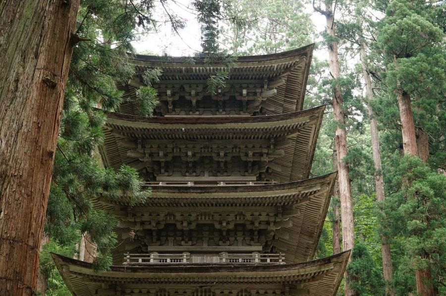 Tree Architecture Religion Place Of Worship Built Structure History Cultures Day Ancient Growth Spirituality Building Exterior Outdoors No People Travel Destinations Leaf Nature Ancient Civilization Branch Japan Japan Photography Temple