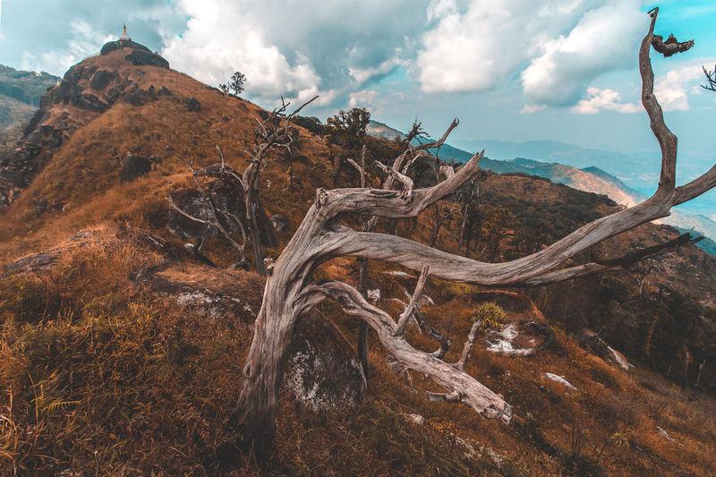 Driftwood on landscape against sky
